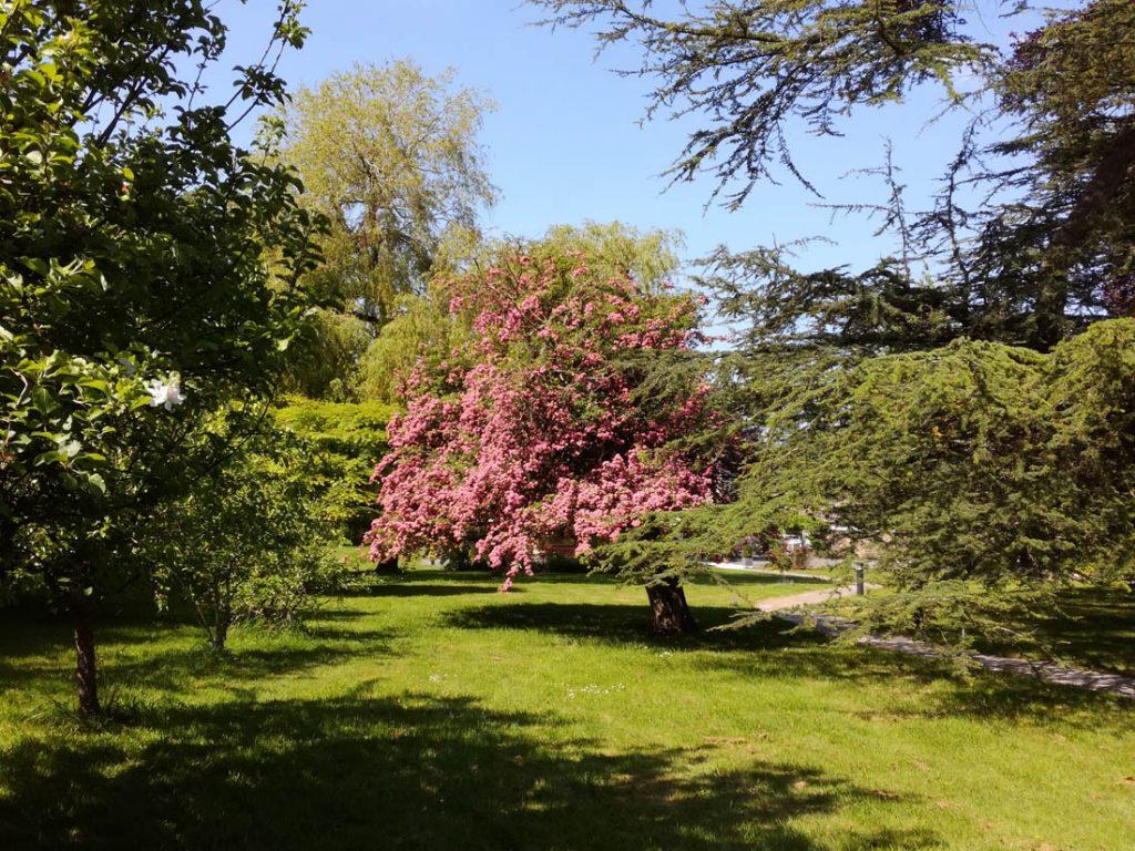 Garden of Chiseldon House, Swindon, Wiltshire
